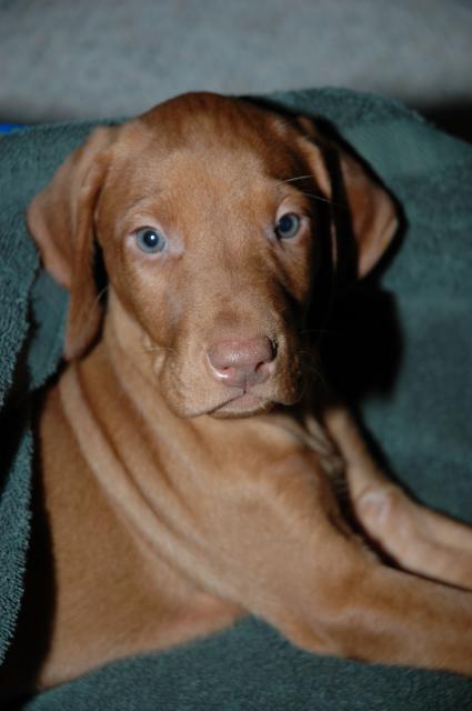 puppy010208-01.jpg
