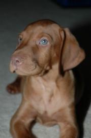 puppy010308-03.jpg