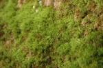 Fuzzy moss.