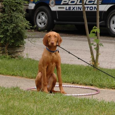 training-hoop